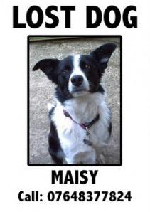 missing dog poster maker